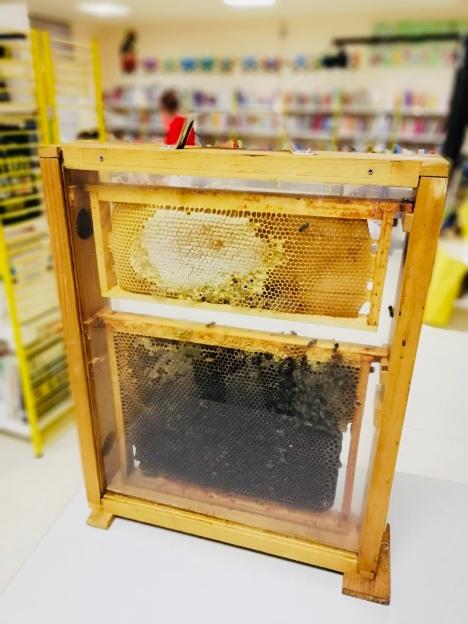 abelhas 3.jpg